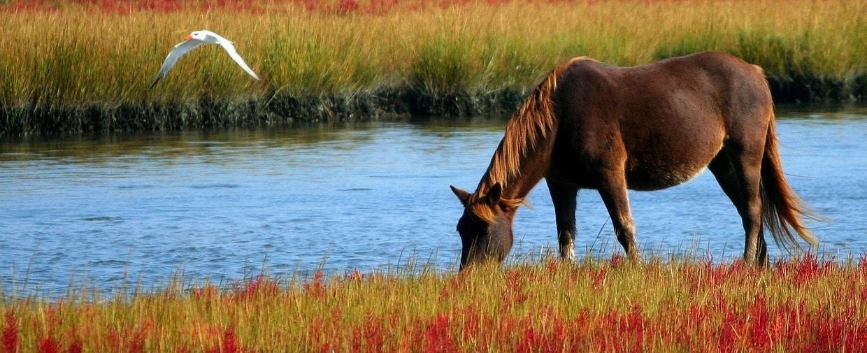 Angst bei Pferden mit CB vertreiben