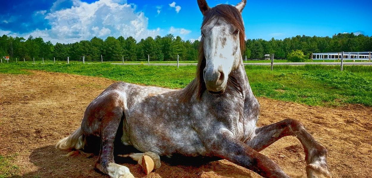CBD Pferd