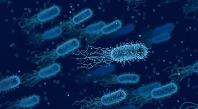 Cannabis Fermentation Bakterien