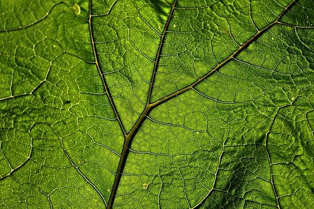 Mangelerscheinungen Cannabis grün
