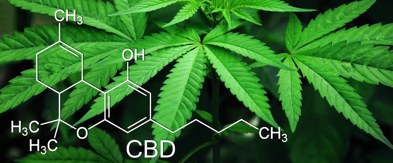 CBD-Öl und Ekzeme